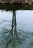 Upside Down. The reflection of the tree in the canal. There is one leaf floating by Royalty Free Stock Photo