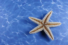 Upside down star fish Stock Photos