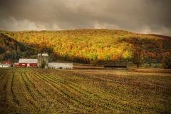 Upstate barn and field with fall colors. Upstate NY Corn field and a barn with fall colors and dramatic clouds stock photo