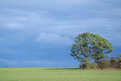 Upstate la terra dell'azienda agricola di New York con l'albero con un blu si è appannata il cielo in autunno Immagine Stock