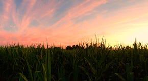 Upstate New York sunset. Sunset over a cornfield Stock Photos