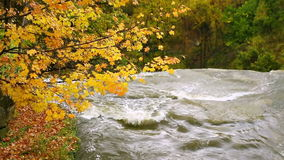 Upstream of Brandywine Falls Loop. Looping video features Brandywine Creek disappearing over a large waterfall with colorful fall leaves above. Cuyahoga Valley stock footage