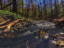 Upstream in the spring. Looking upstream in the spring forest Royalty Free Stock Image