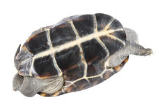 Upturned tortoise Stock Images