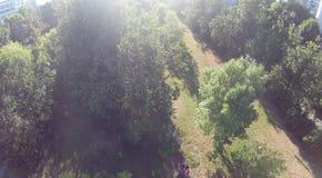 Upview del parco Fotografia Stock Libera da Diritti