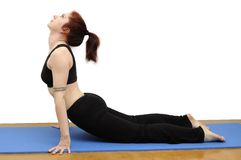 Upward dog Stock Photography
