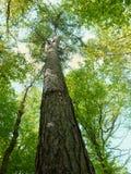 High tree Royalty Free Stock Photos