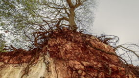 Upward shot of cliff exposing tree roots. Video of upward shot of cliff exposing tree roots stock video footage