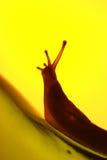 Upward struggle. A slug with yellow backlighting climbing up a glass bottle, concept struggle, journey royalty free stock photography