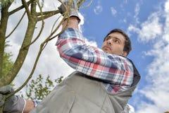 Upward view gardener next to tree Stock Photography