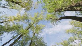 An upward view of a tree. And the sky stock footage