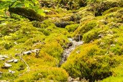 Uracher Wasserfälle, плохое Urach, Германия Стоковые Фото