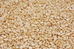 Urad dal Royalty Free Stock Photo