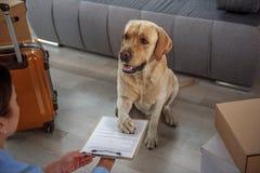 Uradowany psi robi podpis na papierze obrazy stock