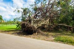 Uragano Irma Aftermath Immagine Stock Libera da Diritti
