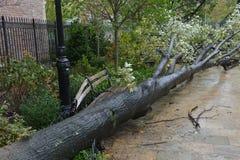 Uragano Sandy Immagini Stock