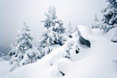 ural包括的岩石西伯利亚雪taiga的结构树 库存图片