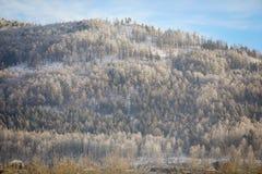 Ural, βουνά Ilmensei στην επιφύλαξη Ilmensky το χειμώνα στοκ εικόνες