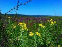 Ural-Grasfeld Wiesen der schönen Feldfeldwiesen der Blumen russischen blüht blühendes Stockfoto