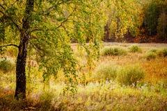 Ural höst Arkivfoto