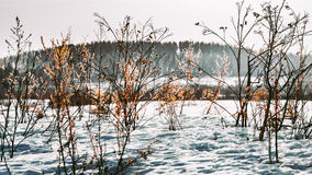 Ural landscapes. Scenic views of the expanses of the Ural depths Royalty Free Stock Images
