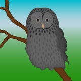Ural owl sitting on a branch Royalty Free Stock Photos