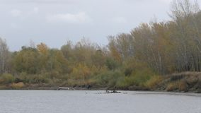 Ural River in autumn. The Ural River is the natural boundary between Europe and Asia stock footage
