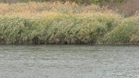 Ural River in autumn. The Ural River is the natural boundary between Europe and Asia stock video footage