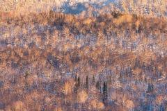 Uralbergen in het avond licht stock afbeelding