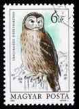 Uralensis del Strix del búho de Ural, circa 1984 Fotografía de archivo