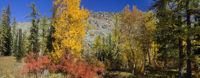Urals autumn Stock Images