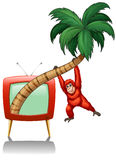 Urangutan hanging on the coconut branch Stock Photo