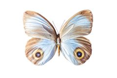 Urania di taenaris della farfalla su bianco Fotografia Stock Libera da Diritti