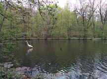 Żuraw w jeziorze Obrazy Stock
