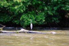 Żuraw w Nikaragua Obraz Royalty Free