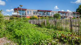 Urban agriculture: a vegetable garden beside an apartment buildi Royalty Free Stock Photo