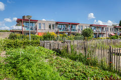 Urban agriculture: a vegetable garden beside an apartment buildi Royalty Free Stock Photography