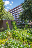 Urban agriculture: a vegetable garden beside an apartment buildi Stock Images