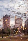 Urban autumn landscape, birch leaves against. The autumn sky Stock Images