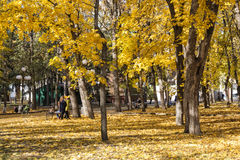 Urban autumn park. Stock Photography