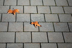 Urban autumn scene Stock Image
