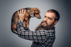 Bearded male dressed in a plaid shirt holds  badger dog. Urban bearded male dressed in a plaid shirt holds a cute badger dog Royalty Free Stock Images