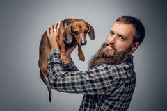Bearded male dressed in a plaid shirt holds  badger dog. Urban bearded male dressed in a plaid shirt holds a cute badger dog Stock Images