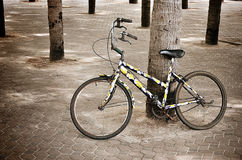 Urban bicycle with coconut tree Royalty Free Stock Photography