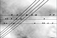 Urban birds on electric wires Royalty Free Stock Image
