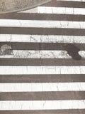 Urban city pedestrian zebra crossing top view Stock Photography