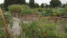 Urban Community Garden stock video footage