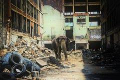 Urban Elephant Stock Photos