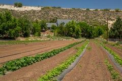 Urban Farming Royalty Free Stock Photography