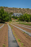 Urban Farming Stock Image
